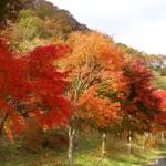 わらび平森林公園の紅葉